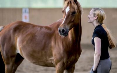 Artikel van Jessica van Soest over hengstige merries in Veehouder en Veearts