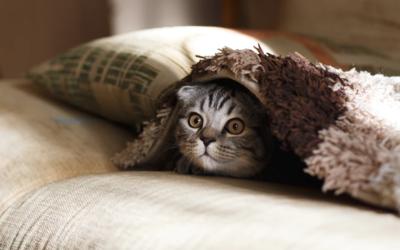 Tips tegen vuurwerkangst bij honden en katten