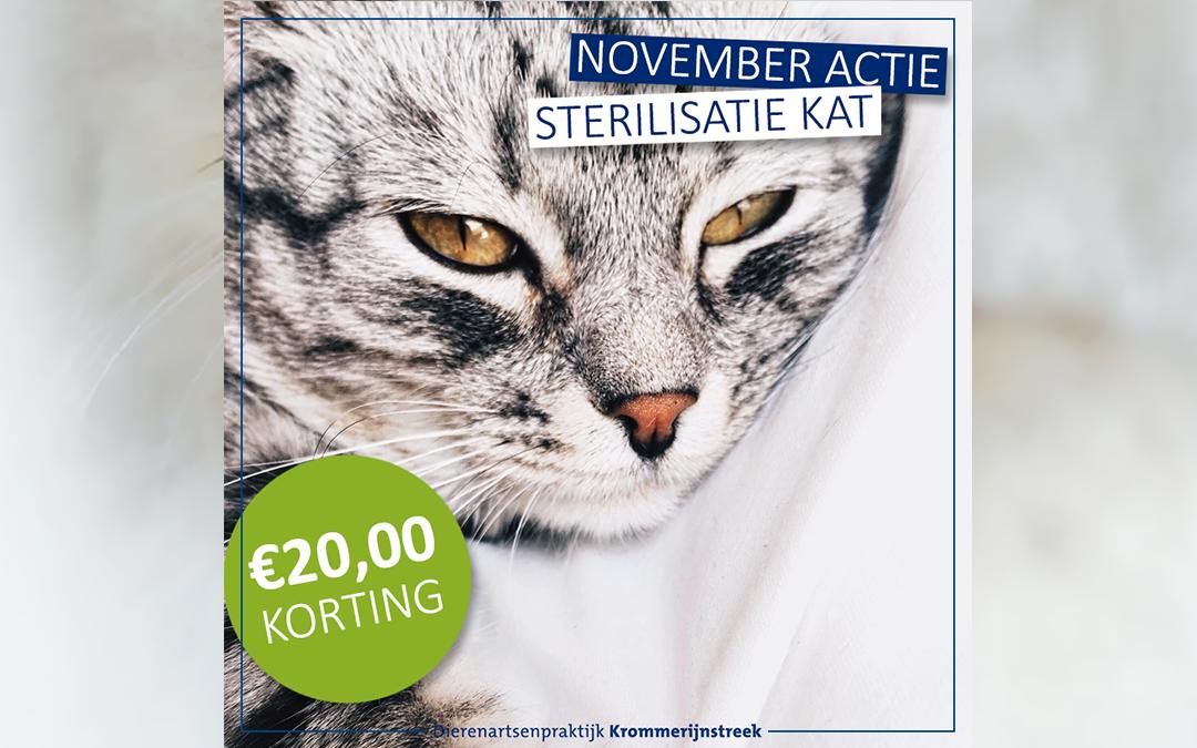 November actie: €20,00 korting op sterilisatie kat