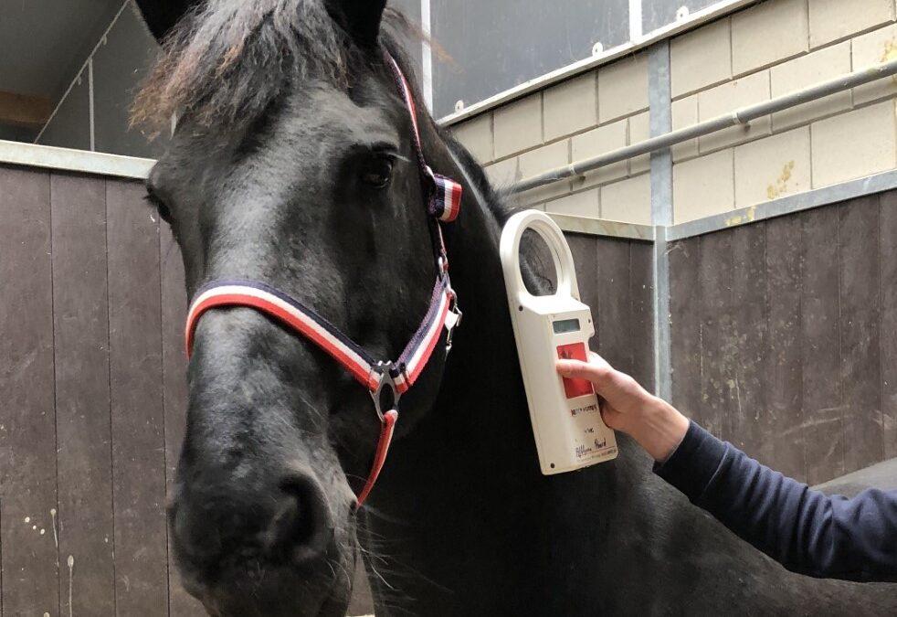 Registratieplicht Paarden